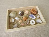 Muscheln, Schnecken und Sand vom Strand in einer kleinen Holzkiste von Heike Rau
