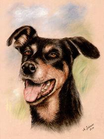 Hundeportrait Dobermann by Marita Zacharias