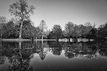 Bäume säumen den See von Stephan Gehrlein