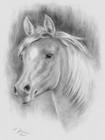 Pferdeportrait Bleistiftzeichnung von Marita Zacharias