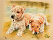 Ruhepause am See - Hundeportrait von Marita Zacharias