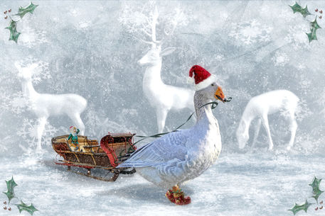 Die-weihnachtsgans