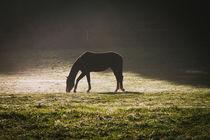 Pferd im Flutlicht von Renate Dohr