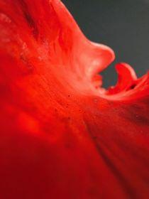 Red Beauty Photography  von Valentina Sullivan