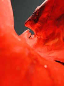 red beauty by Valentina Sullivan