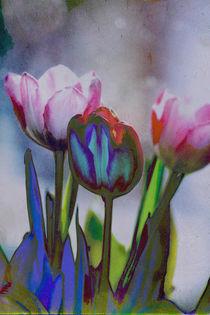 Tulpenstrauß bunt von Petra Dreiling-Schewe