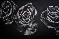 Rosen monochrom by Petra Dreiling-Schewe
