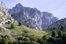 Bergwiese 2 von Tobias Traunecker