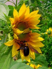Sunflower Bee by Richard H. Jones