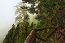 Nebelwald von Iris Heuer