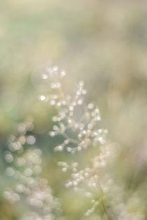 Gras mit Tautropfen von Tobia Nooke