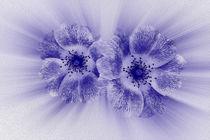 Flower in blue by feiermar