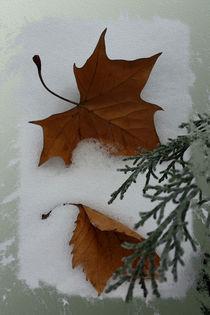 Maple leaves by feiermar