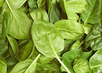 Image Of Baby Spinach Leaves by Vladimir Nenov