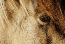 Eye of the horse von Thomas Thon