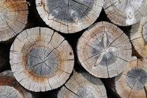 Logs by Thomas Thon