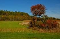 Herbst Landschaft von Iris Heuer