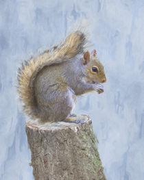 'Grey squirrel on tree stump' von Robert Deering