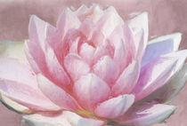 'Pink Water Lily' von Robert Deering