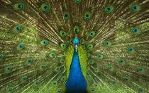 animals.color.photoeyeonline I11 by Frank Kiesel