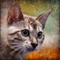 Retro Bengalkatze von kattobello