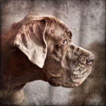 Digital Art Deutsche Dogge von kattobello