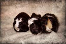 Retro drei Meerschweinchen von kattobello