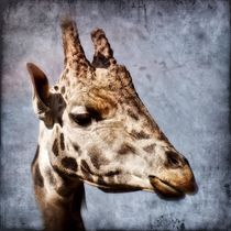 Retro Giraffe von kattobello