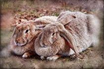 Retro zwei Kaninchen von kattobello