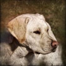 Retro Labrador von kattobello