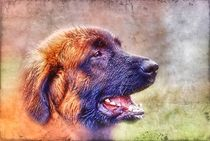 Retro Leonberger Profil von kattobello