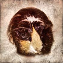 Retro Langhaarmeerschweinchen von kattobello