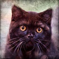 Retro schwarze Britisch Kurzhaar von kattobello
