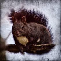 Retro Schwarzes Eichhörnchen von kattobello