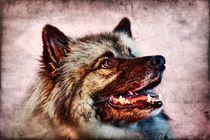 Retro Wolfsspitz von kattobello