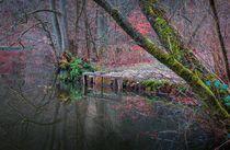 'Im Zauberwald der Pfalz , kleines Stauwehr am romantischen See' von Christine Maria Grosche