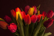 Close-up of multicolored tulips with warm sunset light von Jim Corwin