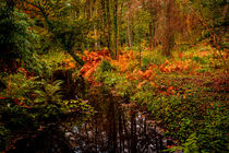 Woodland Stream in Autumn by Colin Metcalf