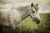 Welshpony von AD DESIGN Photo + PhotoArt