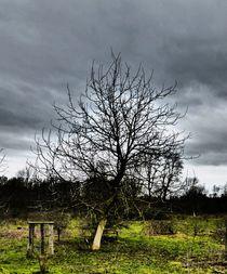'Baum 2020-01' von maja-310