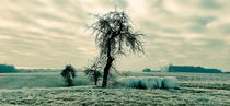 lonely tree by Andrea Meister