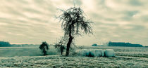 lonely tree von Andrea Meister