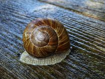 Schnecke by Andrea Meister