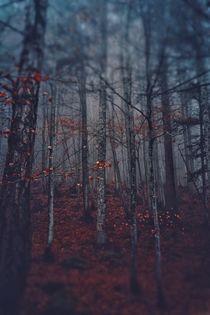 magic forest by emanuele molinari