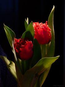 Tulpen - 2020 - 1 by maja-310