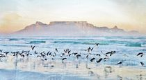 seagulls and table mountain by Werner Lehmann