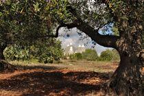 Trulli im Valle d'Itria hinter einem Olivenbaum von wandernd-photography