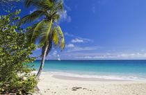 Caribbean Beach With Palm von cinema4design