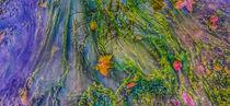 Algen im Wasser by Andrea Meister