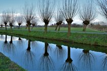 Bare willow trees reflecting in water von Maud de Vries
